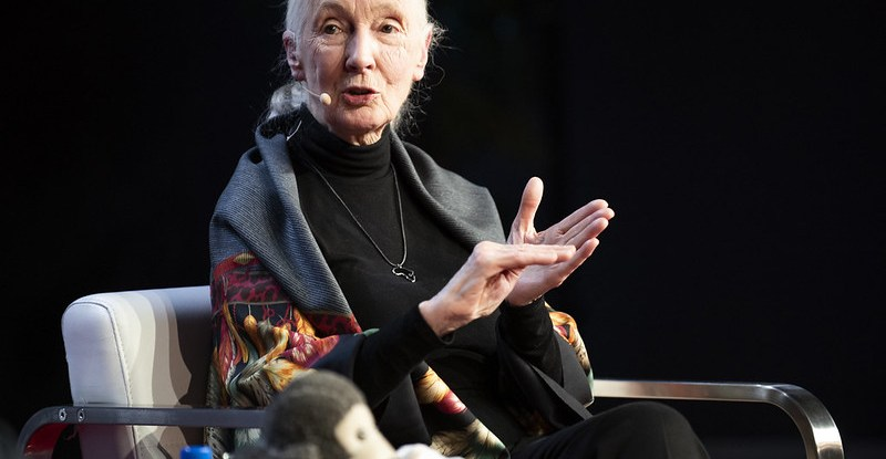 Jane Goodall discusses food security and the growing human population