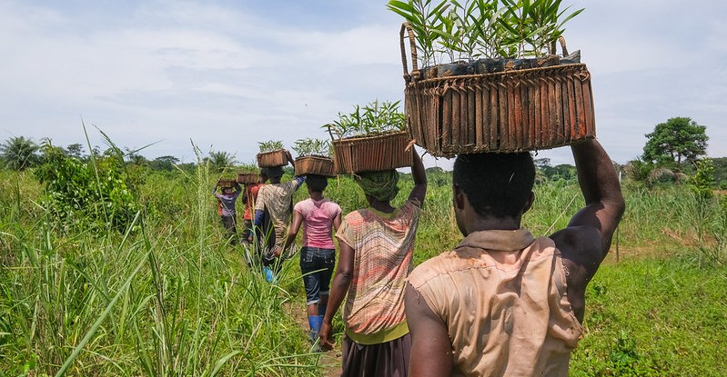 People carry baskets on their heads and walk through a plantation