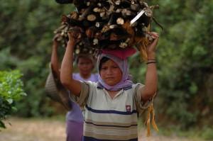 Villagers collect wood around Mount Halimun Salak National Park, Java, Indonesia. Photo: Aulia Erlangga/CIFOR