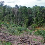 Land clearing for oil palm plantations on Jambi has made life difficult for remote forest dwellers. Photo: Iddy Farmer/CIFOR