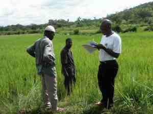 Farmers in Guinea. Photo: Terry Sunderland/CIFOR