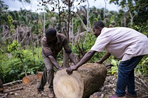 Not only in Cameroon, the pressures of urban development, population growth, forest commercialisation and land-use transition are changing the face of the forest landscape at a rapid pace. Photo: Ollivier Girard/CIFOR
