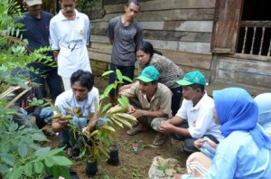 AgFor staff gives instruction to farmers on how to do grafting, South Sulawesi. Photo by: World Agroforestry Centre/AgFor South Sulawesi team