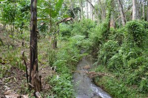 The area of Lantapan, Bukidnon, is vulnerable to erosion. Photo: World Agroforestry Centre/Carminsita Canales