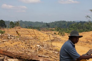 It is feared that the expansion plans for sugarcane will lead to further deforestation in Indonesia, here a scene from Jambi. Photo: Patrice Levang/CIFOR