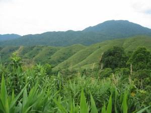Sugarcane cultivation, here Vietnam. Photo: Manuel Boissiere/CIFOR