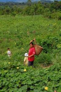 Photo: World Agroforestry Centre