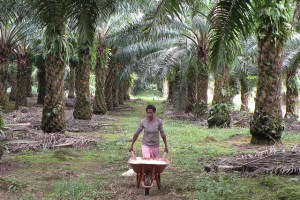 What does it need to make palm oil more sustainable? Photo: Agus Andrianto/CIFOR