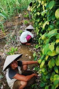 Agroforestry activity, West Kalimantan, Indonesia, 2009. Photo: Ryan Woo/CIFOR