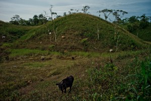 Agriculture, forestry and other land use (AFOLU) represents 20–24% of global greenhouse gas (GHG) emissions. Deforested lands used for pastoral farming. Napo Province, Ecuador. Photo: Thomas Munita/CIFOR