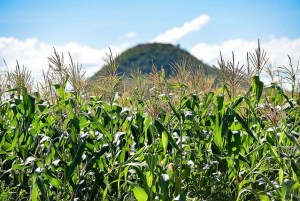 As investors favor large-scale plantation for their crops, it is feared that the rural poor will not benefit sufficiently from the investment boom. Photo: Neil Palmer/CIAT