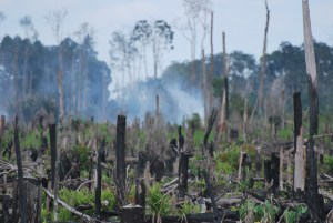 Land cleared by swidden for an oil palm (Elaeis guineensis) plantation. Photo: Renee Miller/CIFOR