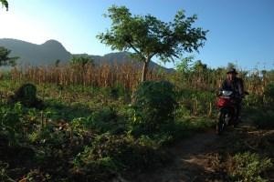 Plantation in Bali. Photo: Aulia Erlangga/CIFOR