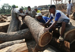 Workers moving teak (Teactona grandis) logs to transport to sawmills. Jepara, Central Java, Indonesia. Photo: Dita Alangkara/CIFOR