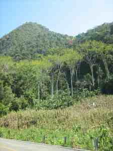 Secondary forest in Chiapas, Mexico. Photo: Madelon Lohbeck