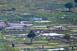 Climate change will affect agricultural production. Photo: Daniel Tiveau/CIFOR
