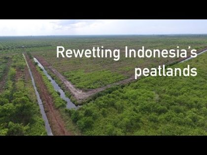 Rewetting Indonesia's peatlands