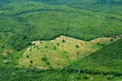 Can REDD+ help Brazil roll back rising deforestation rates?