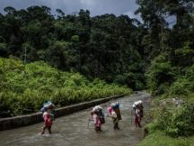 Social forestry impacts local livelihoods in Indonesia