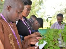 Plant breeders contribute to achieving food security across Africa