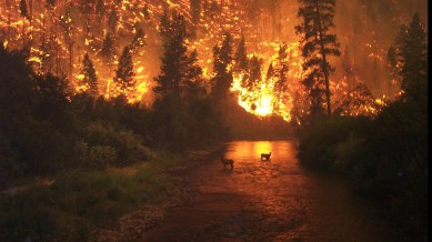 -fire-in-the-forest-elk-in-the-river--photographed-by-john-mccolgan-on-6-august-2000-in-sula-complex-bitterroot-national-forest-usa-1760-x-1087