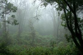 rain_forest_ii