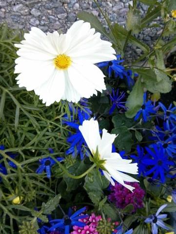 LarsStanaflowerslenspens nature mar15