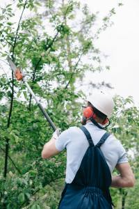 back view of gardener in helmet trimming trees with telescopic pole saw
