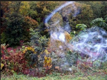Ghosts may also be identified through mist or energy in photos that is not visible with the naked eye.