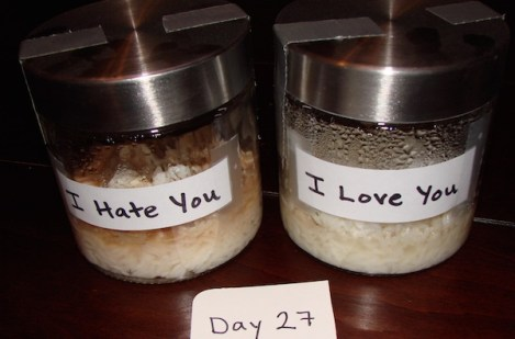 rice experiment dr. emoto
