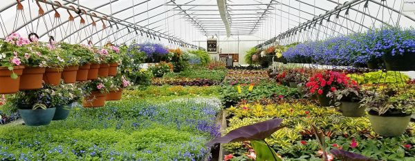 garden center-planting supplies