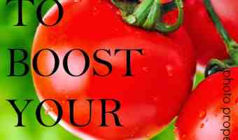 Top 12 Foods that Boost Your Brain Power – Pack Em' Up & Eat Em' Up!!