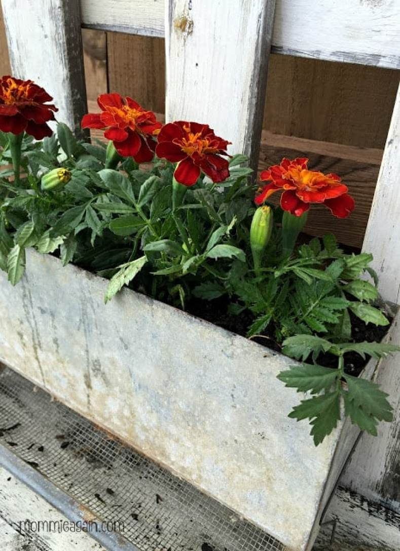 DIY Vintage Feeder Turned Flower Planter