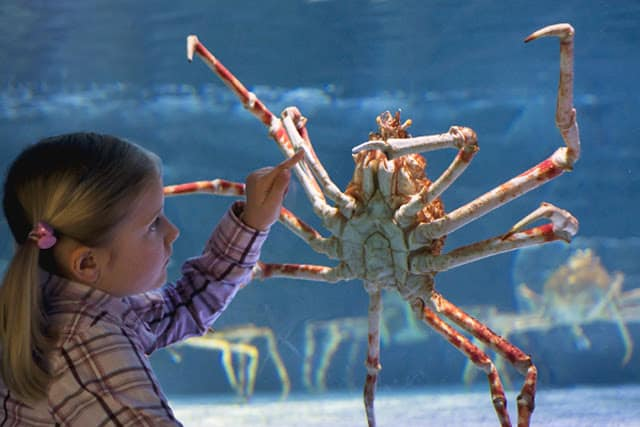 CLAW YOUR WAY TO SEA LIFE GRAPEVINE THIS APRIL