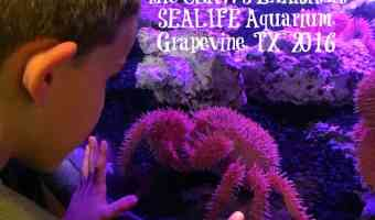 A Fun Time at SEALIFE Aquarium Grapevine, TX The CLAWS Exhibit