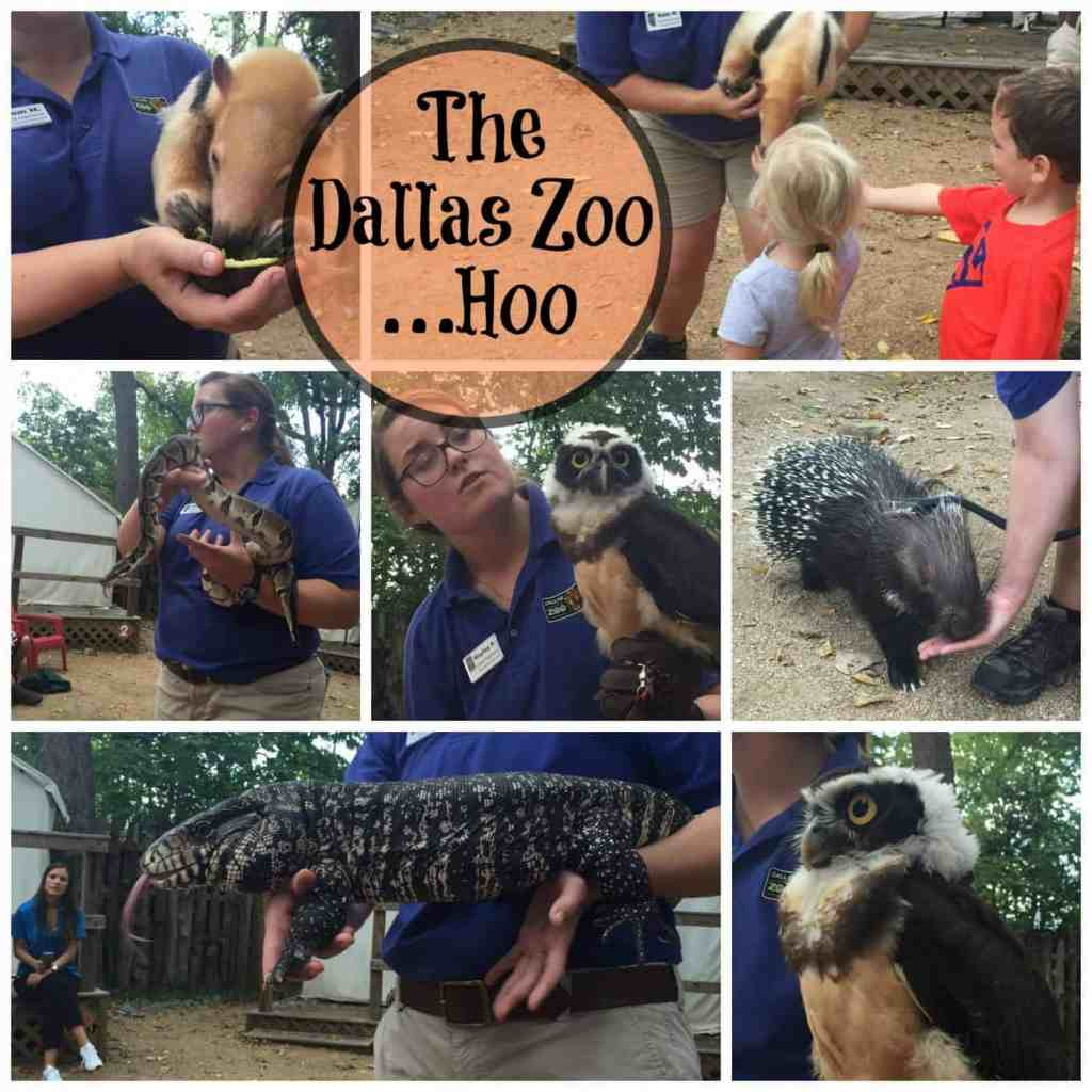 Dallas Zoo ZooHoo Blogger Day