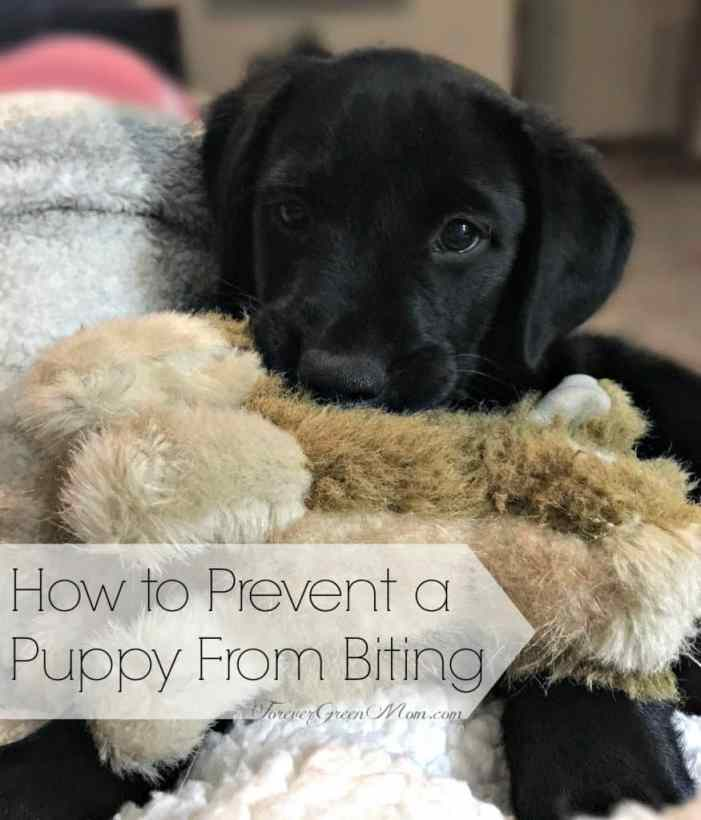 how to bring a new puppy home