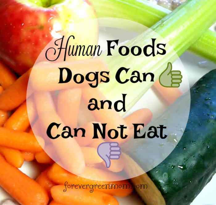 Human Foods Dogs Can And Can Not Eat Forever Green Mom