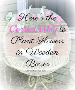The Correct Way to Plant Flowers in Wooden Boxes