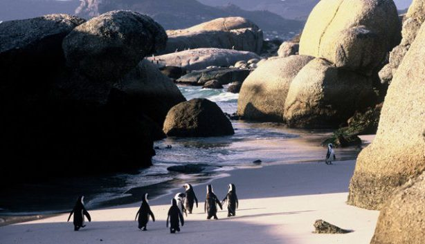 trave-beach-penguins-best-top-world