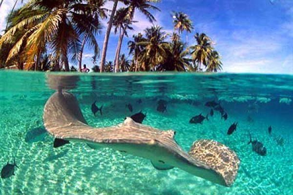 paradise-fiji-travel-island