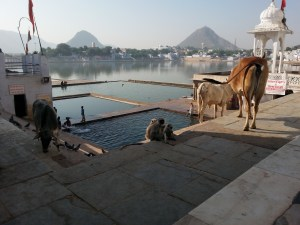 india-price-guide-pushkar