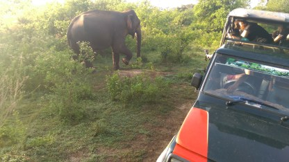 elephant-wild-safari