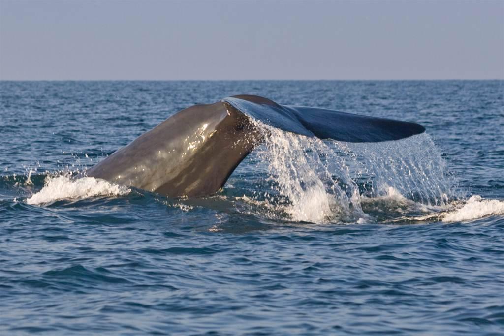 Mirissa sri lanka whale watching