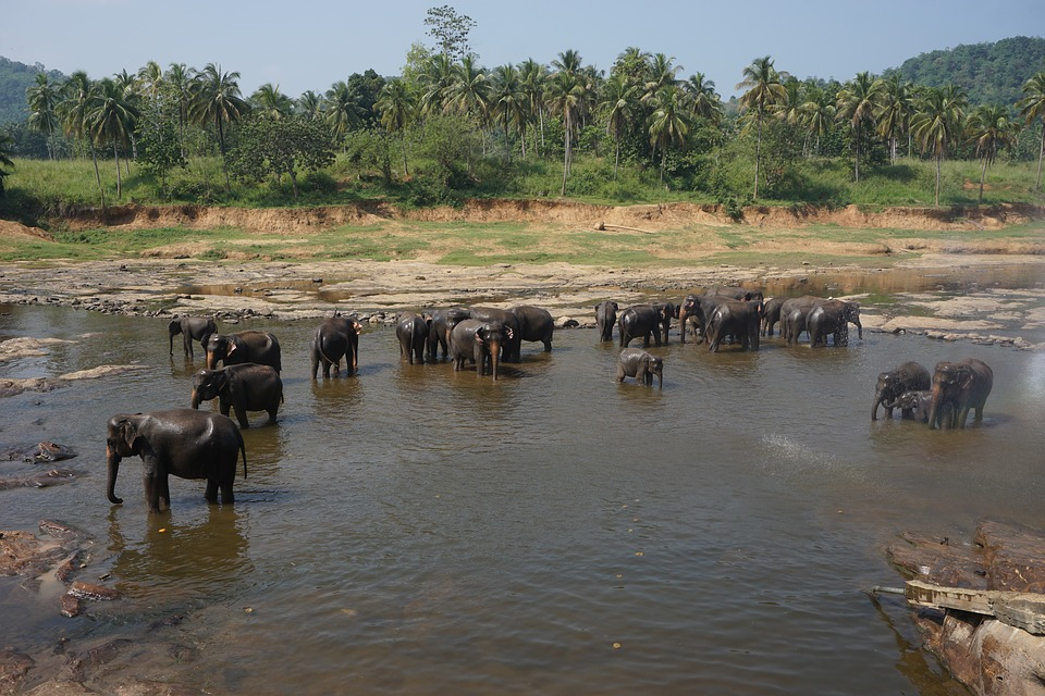 sri-lanka-elephant-national-park