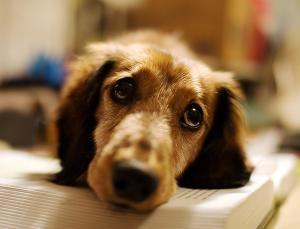 Sad-Puppy-Face-Picture
