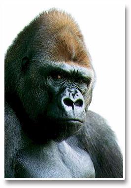 Forex_Kong_Angry