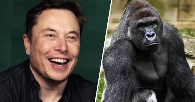 Kong and Musk