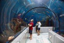 Cofortel Hotel - Aquarium Package Forfaits Qubec