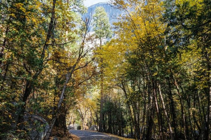 Yosemite 26